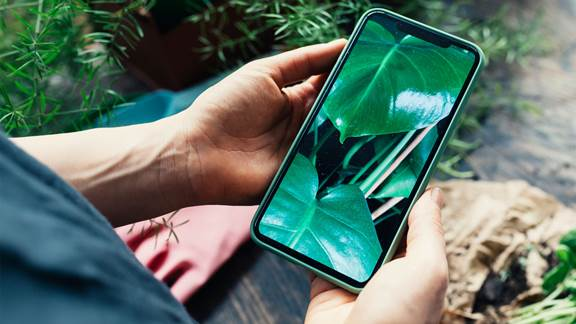 Phone held in hand with plant on screen