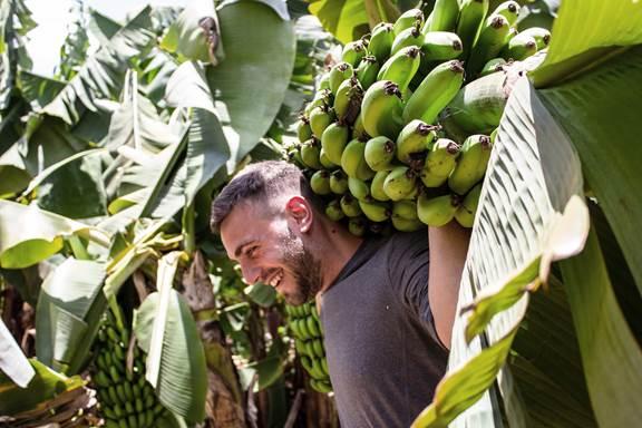 Man in banana field