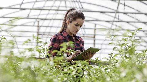 Woman looking at an iPad in a large greenhouse
